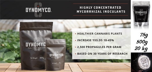 DynoMycoC-Home-Biofloral